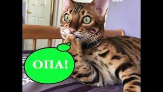Смешные коты и кошки. Коты в ванной.