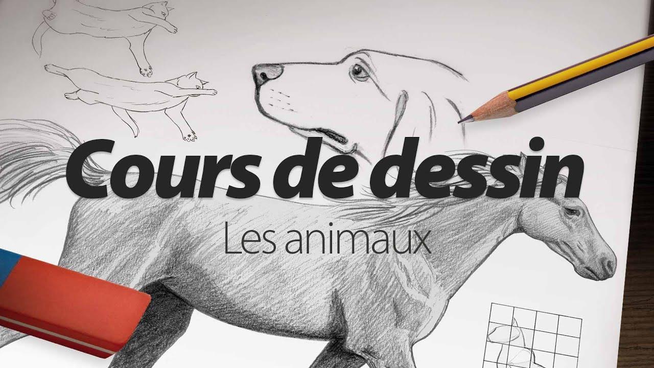 Cours de dessin apprendre dessiner les animaux par elephorm youtube - Dessin a dessiner ...