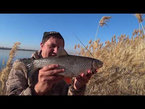 Рыбалка в Камышах Ловля Голавля на Течении Ловля на Реке Донными снастями