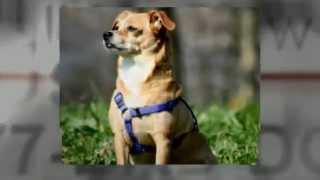 Dog Training Dog Training School For Instructors San Diego