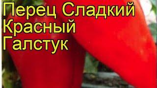 Перец сладкий Галстук Красный. Краткий обзор, описание характеристик cápsicum ánnuum