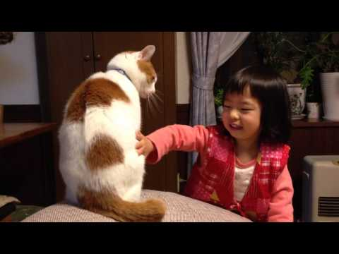 My cat hates  my Japanese little daughter! poor cat!
