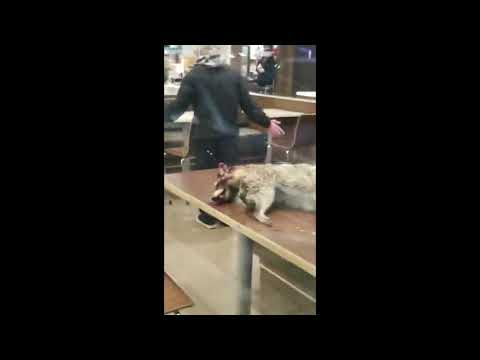 Woody and Wilcox - Man Takes A Dead Raccoon Into A McDonald's