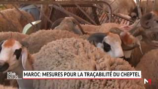Maroc: mesures pour la traçabilité du cheptel
