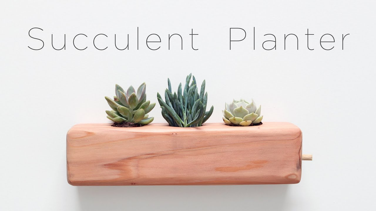 Self Watering Plants Diy Succulent Planter Youtube