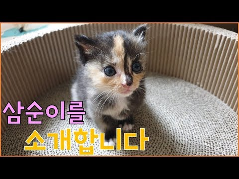 아기고양이 4남매 구조 영상 [7] - 아기고양이 입양보내요 (삼순이편)