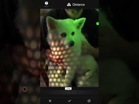 Apollo: Immersive illumination - Luna (the dog)
