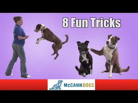 8 Fun Tricks You Can Teach Your Dog To Do