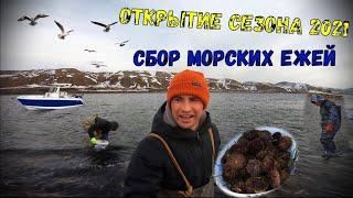 Край света Сахалинская РЫБАЛКА Сбор морских ежей Открытие сезона 2021