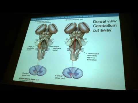 BSCI 353 Lecture 18 Basal Ganglia