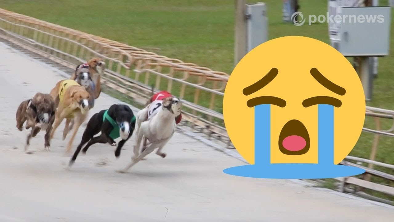 Daytona Dog Track >> The Last Few Months Of Dog Racing In Florida