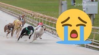 The Last Few Months of Dog Racing in Florida