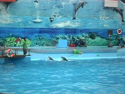 xem xiếc cá heo và sư tử biển tập 1