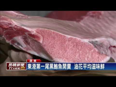 東港第一尾黑鮪魚 生魚片一口300元-民視新聞