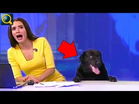 15 EMBARRASSING & BEST ANIMALS SHOW ON LIVE TV
