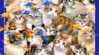 Смешное видео, приколы про кошек, собак и других животных