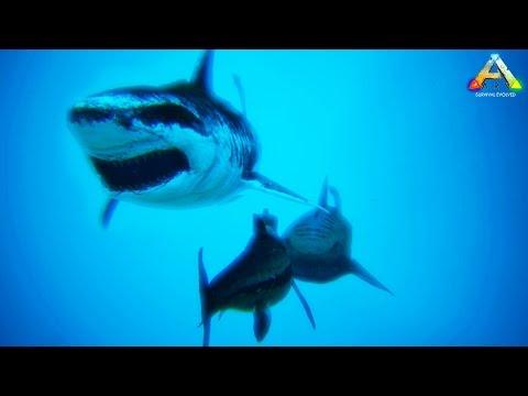 HikePlays ARK Survival - Taming MEGALODON & Exploring Oceans!! - Dino Hunter! EP.14 w/ Stream Team!