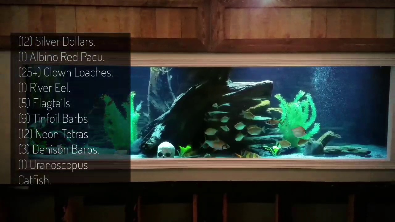 800 gallon diy plywood monster fish tank youtube for 800 gallon fish tank