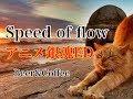 【アニメ銀魂ED】Speed of flow/THE RODEO CARBURETTOR【本人完全再現!】