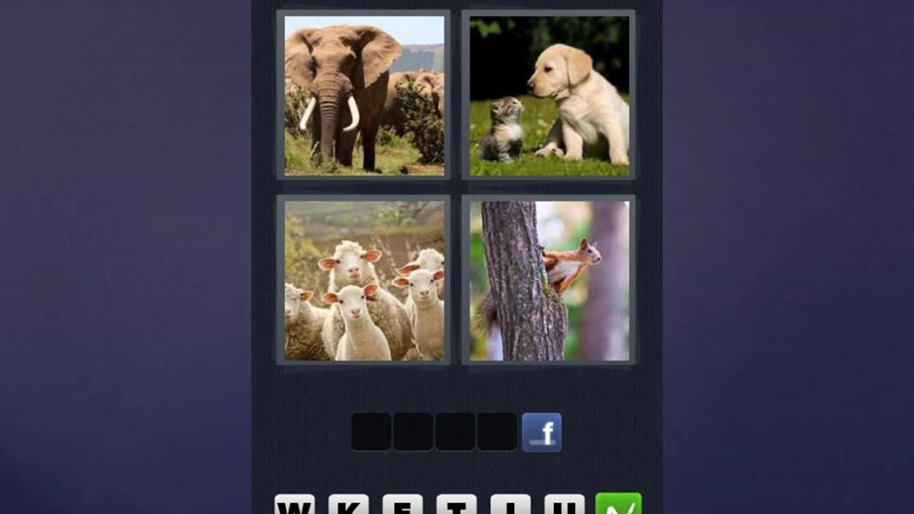 4 Bilder 1 Wort Hund Katze