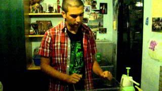 ANAE - Allevamento Achatina fulica