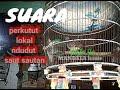 Suara Pancingan Perkutut Lokal Bahan  Ampuh  Mp3 - Mp4 Download