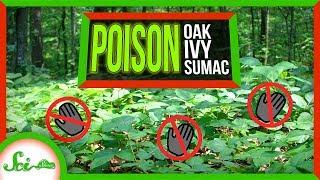Poor, Misunderstood Poison Ivy
