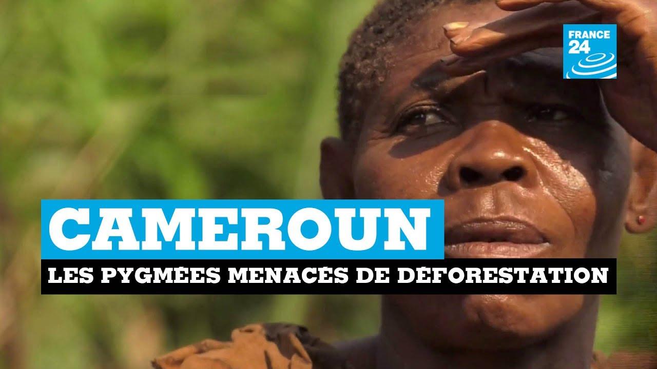 Cameroun : les pygmées menacés par la déforestation