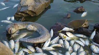 اليمن | ظاهرة غريبة على ساحل أبين قرب عدن.. ماذا حدث للأسماك وماء البحر؟