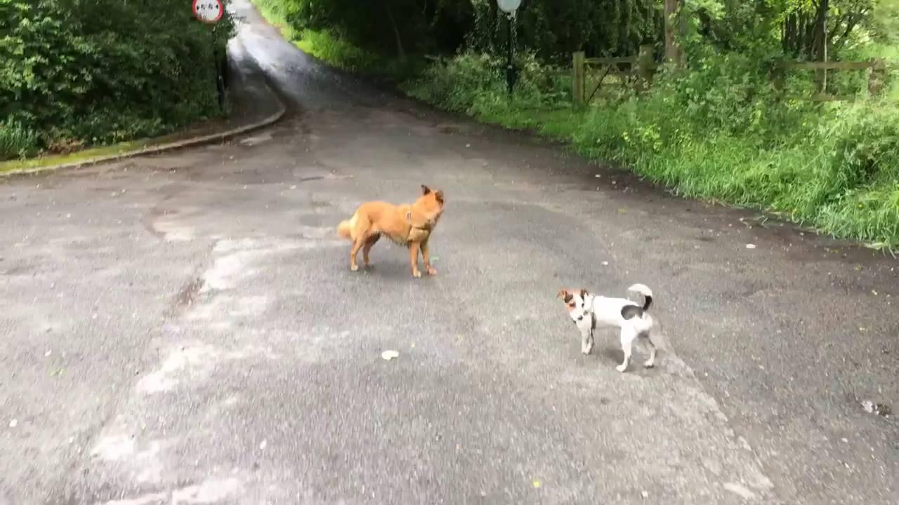 Action Movie App - A dog walk