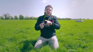 Grassland Management Tips for dairy cows