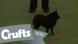 Obreedience - Part 7 - Poodle, Schipperke & Lhasa Apso | Crufts 2015