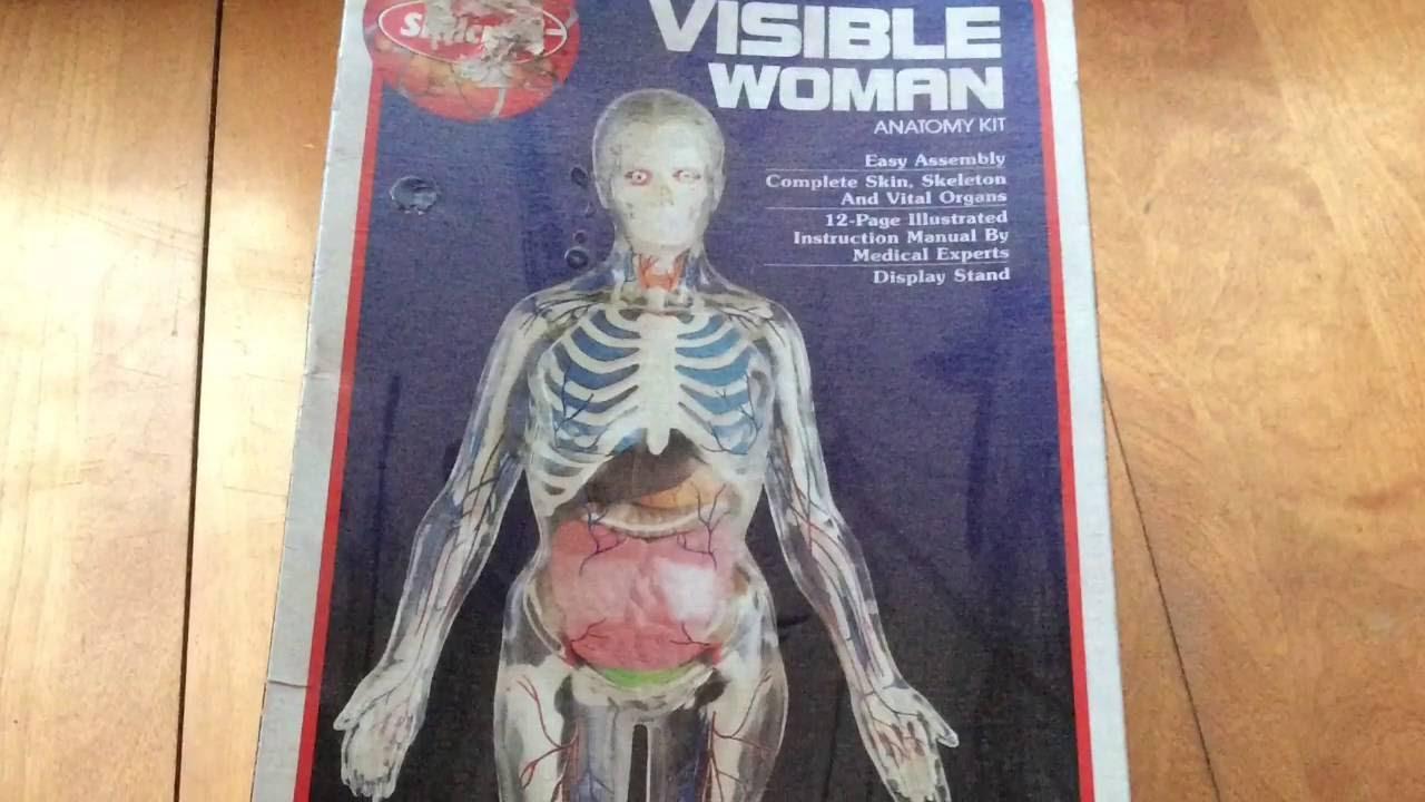 Skilcraft Visible Woman Anatomy Kit - YouTube