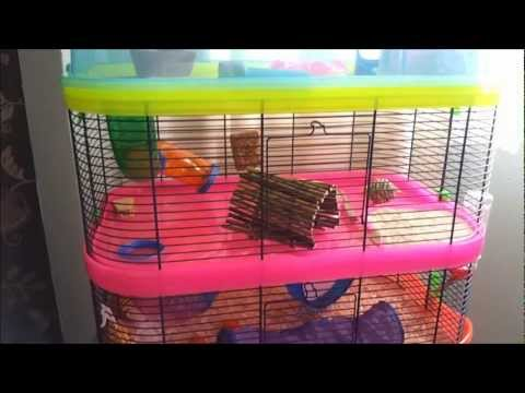 quick-hamster-cage-tour
