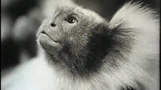 В мире животных. Научно-популярный, 1965 г. Франция