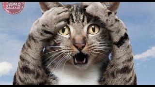 Приколы с котами Добрый позитив Видео про котов Кошки ЖивотныеСоздай себе хорошее настроение