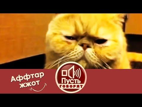 Смешные выпуски - архив Видео - Пусть говорят