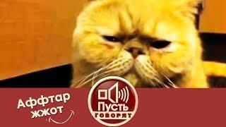 Аффтар жжот: самые смешные видео года. Пусть говорят.