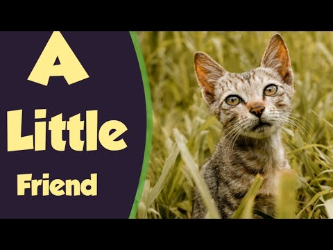 A little friend | Cinematic Video 2020