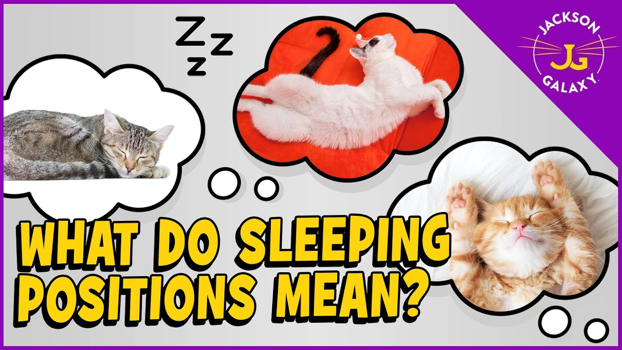 What Sleeping Positions Say About Your Cat
