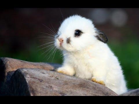 Самые милые и пушистые кролики. Фото. Смотреть Всем!