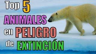 Top 5 ANIMALES en PELIGRO de EXTINCIÓN