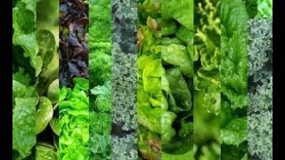 Importance of Leafy Greens - How to prepare them