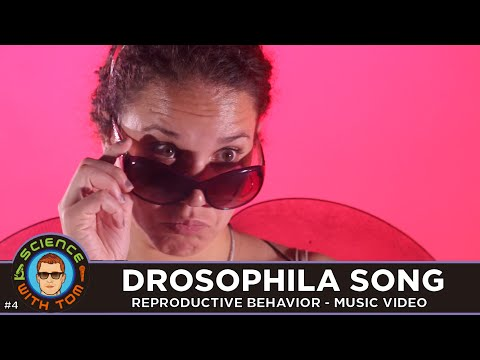 Drosophila Song - Music Video - Science With Tom #4