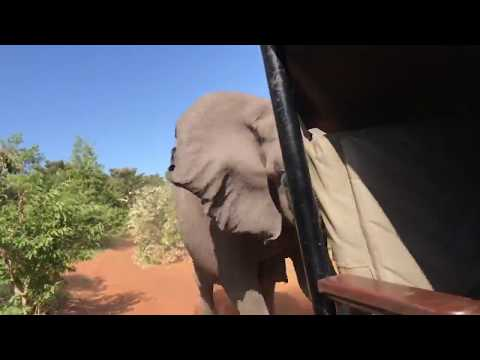 An elephant attacked our car! (In Chobe river national park)