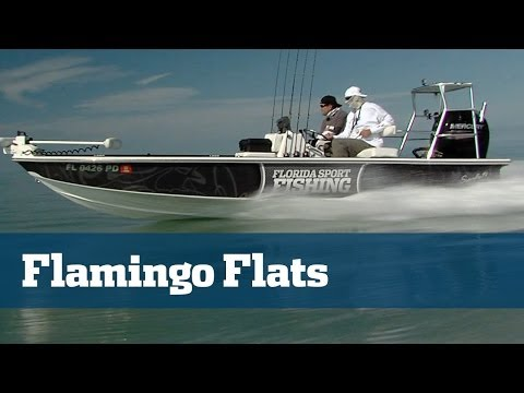 Exciting Sight Fishing For Redfish And Trout In Flamingo Everglades