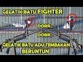Lomba Gelatik Batu Fighter Duel Gelatik Batu Adu Tembakan Ngerol Panjang Kontes Gelatik Batu  Mp3 - Mp4 Download