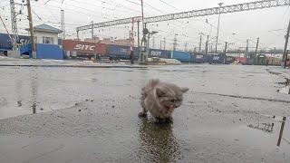 Почему выбросили породистого котенка на вокзале под дождем  threw a kitten in the rain