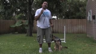 Dog Training & Care : Exercise Ideas With Your Dog