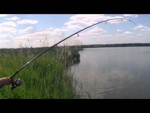 Ловля карпа на платном водоеме Волково
